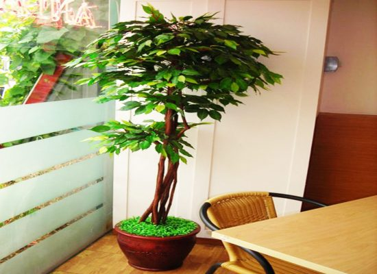 Pohon Topiary